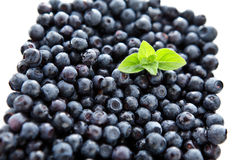 Blueberries with mint Stock Image