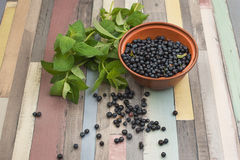 Blueberries and mint Stock Images