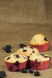 Blueberries muffin Stock Image