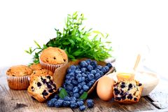 Blueberries and muffins Stock Image