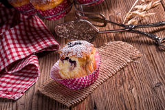 Blueberries muffins Stock Photos