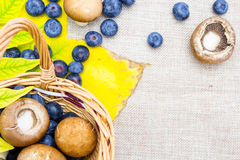 Blueberries and mushrooms in wicker basket Stock Image