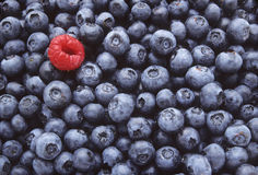 Blueberries and One Raspberry Royalty Free Stock Photography