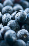 Blueberries (Organic) Royalty Free Stock Images