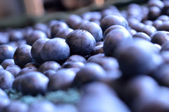 Blueberries out to dry royalty free stock photo