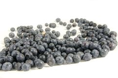 Sweet fresh blueberry`s look at something. Blueberries are perennial flowering plants with indigo-colored berries. They are classified in the section Cyanococcus Royalty Free Stock Image