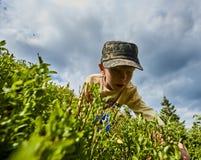 Blueberries picking in Carpathians Stock Photos