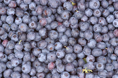Blueberries in a pile Royalty Free Stock Photos