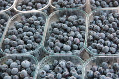 Blueberries put in plastic baskets. In a local food market stall Royalty Free Stock Image
