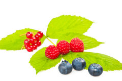 Blueberries raspberries and currants. Mix of blueberries, raspberries and currants Royalty Free Stock Photos