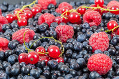 Blueberries raspberries red currant background. Background made of blueberries, raspberries and red currant Stock Images