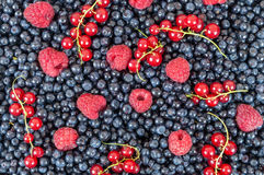 Blueberries raspberries red currant background. Background made of blueberries, raspberries and red currant Royalty Free Stock Photography