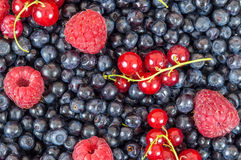 Blueberries raspberries red currant background. Background made of blueberries, raspberries and red currant Royalty Free Stock Image