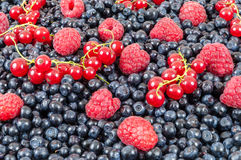 Blueberries raspberries red currant background. Background made of blueberries, raspberries and red currant Stock Photos
