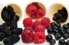 Blueberries and raspberry Stock Photography