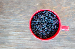 Blueberries in red cup Royalty Free Stock Image