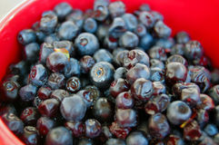 Blueberries in red cup Stock Photo
