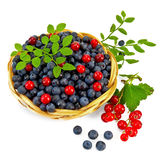 Blueberries with red currants Royalty Free Stock Images