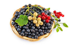 Blueberries with red and white currants Royalty Free Stock Photo
