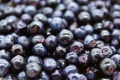 Blueberries in a rounded bowl on a wooden table stock image