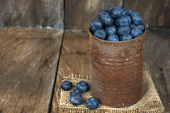 Blueberries in rusty tin can. Ripe blueberries in rusty tin can on burlap and rustic wood Royalty Free Stock Image