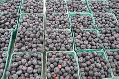 Blueberries For Sale at Farmer's Market Stock Images