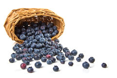 Blueberries, scattered from the basket. Isolated Stock Photos