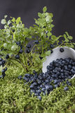 Blueberries scattered on the green moss Royalty Free Stock Photo