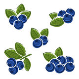 Blueberries set. Vector Royalty Free Stock Photo