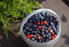 Blueberries in  small bucket Stock Images