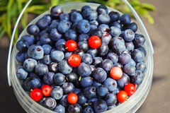 Blueberries in  small bucket Royalty Free Stock Photo