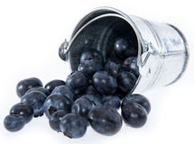 Blueberries in a small bucket on white Royalty Free Stock Photography