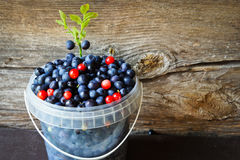 Blueberries in  small bucket Royalty Free Stock Photos