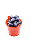 Blueberries in a small red bucket Royalty Free Stock Images