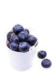 Blueberries in a small white bucket Stock Photos