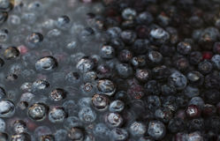 Blueberries Soaking in a Glass Bowl of Water. Many Blueberries Soaking in a Large Glass Bowl of Water Royalty Free Stock Photos