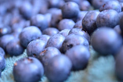 Blueberries on soft blue towel to dry from washing. stock image