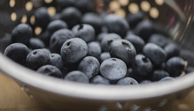 Blueberries. Some fresh and delicious blueberries in a colander stock photography