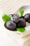 Blueberries on spoon Stock Photo