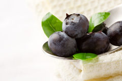 Blueberries on spoon Royalty Free Stock Image
