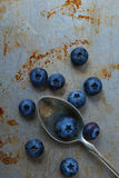 Blueberries on steel plate Stock Photography