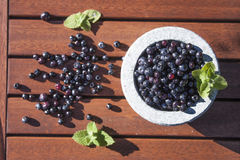 Blueberries in a stone bowl Stock Images