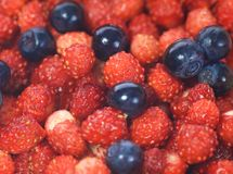 Blueberries and strawberries. Picture of a Fresh blueberries and strawberries Stock Photo