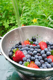 Blueberries And Strawberries. Washing off fresh berries in a bowl outside with clear cold water Stock Image