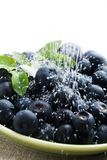 Blueberries with sugar Stock Photography
