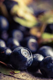 Blueberries on a table Stock Image