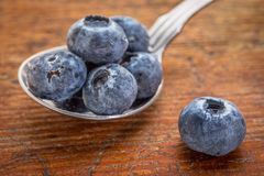 Blueberries on tablespoon Stock Photos