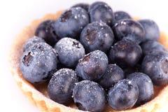 Blueberries tart on white background Stock Photos