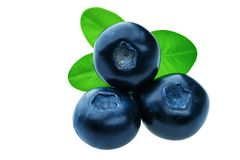 Three fresh blueberries isolated Royalty Free Stock Images
