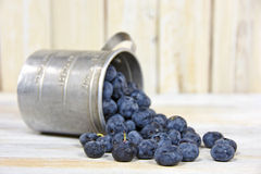 Blueberries in tin measuring cup Royalty Free Stock Photos